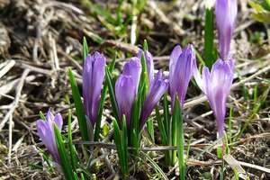 """Pierwsze oznaki wiosny! Nasza galeria z """"wiosennych"""" spacerów rośnie"""