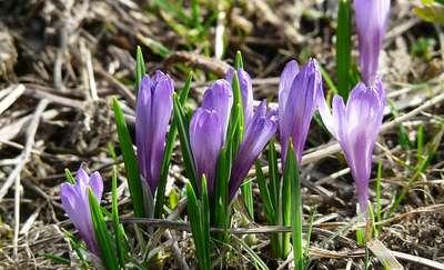 """Pierwsze oznaki wiosny? Dodaj swoje zdjęcie z """"wiosennego"""" spaceru"""