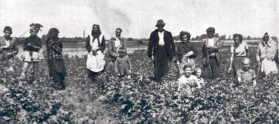 Rodzinne zbieranie stonki