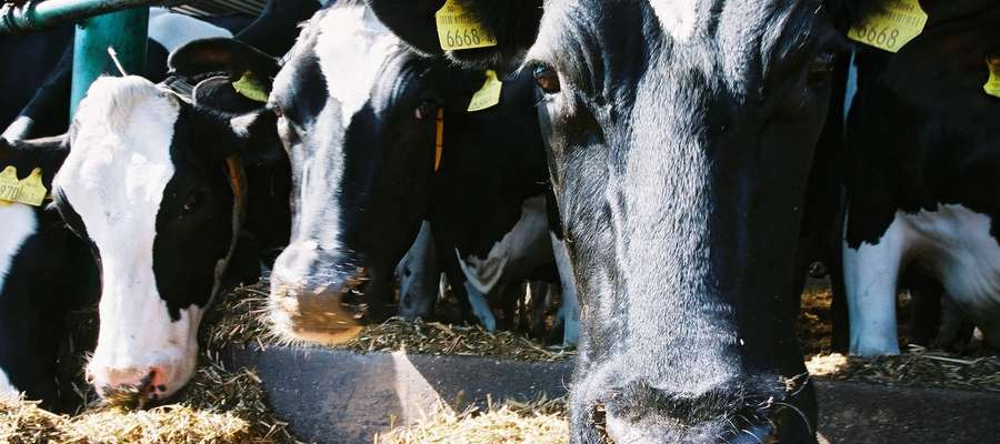 Dla każdego hodowcy zwierząt gospodarskich Targi Ferma to cenne źródło informacji.