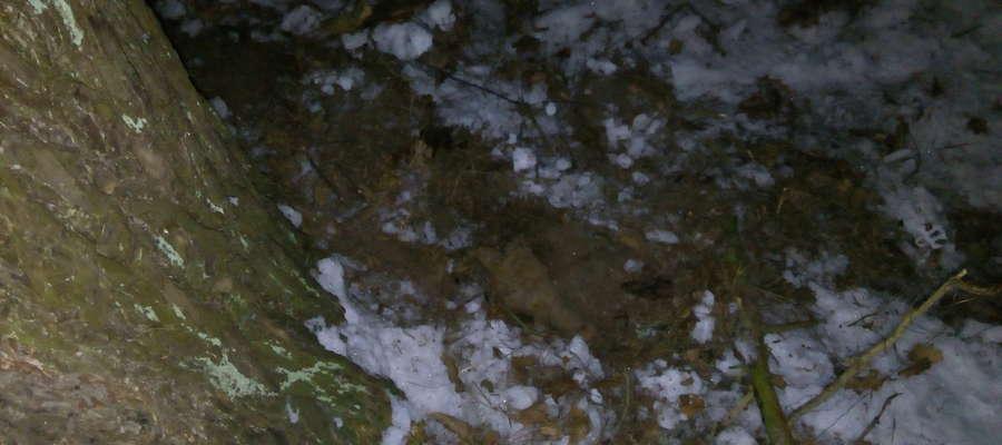 Ukryty wśród suchych liści granat znajdował się w okolicy jednej z zabytkowych kapliczek.