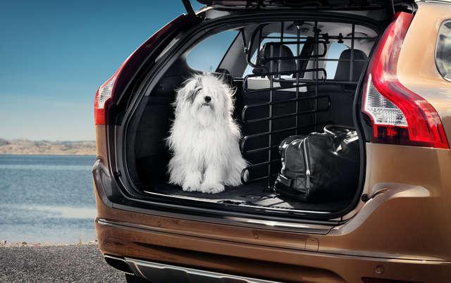 Czy jedzie z nami zwierzak? - full image