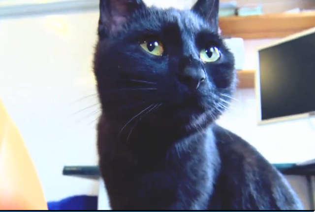 Kot-pielęgniarz w Bydgoszczy. Przytula się do zwierząt. Jego obecność działa na nie kojąco - full image