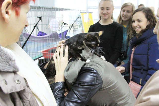 Festiwal kocich wdzięków za nami - full image
