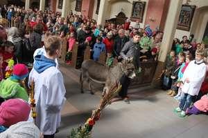 Prawdziwy osiołek na mszy w lubawskim kościele