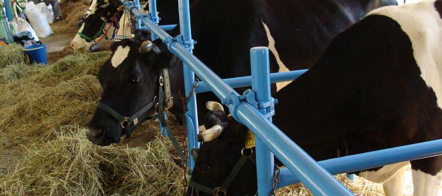 Zniesienie kwot mlecznych budzi niepokój szczególnie tych rolników, którzy prowadzą małą i średnią produkcję.