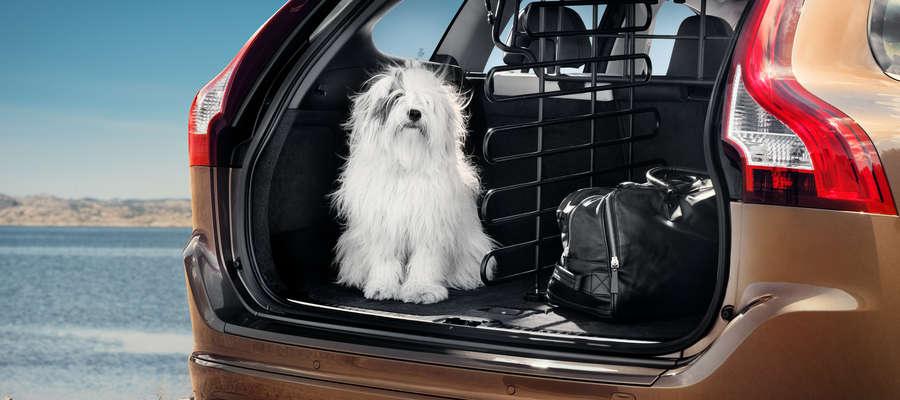 Czy jedzie z nami zwierzak?