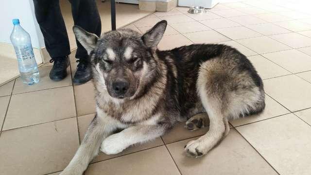 Porzucony pies szuka właściciela - full image