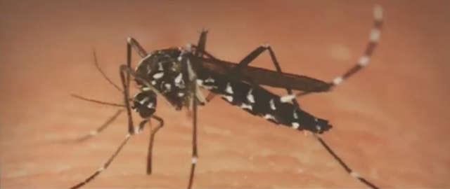 Tropikalne komary coraz częściej trafiają do Europy. Mogą przenosić m.in. febrę - full image