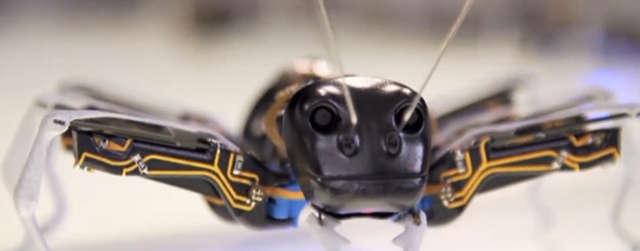 Bioniczne mrówki rozwiązaniem dla fabryk? - full image