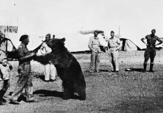 Kapral Wojtek. Niedźwiedź, który był żołnierzem - full image
