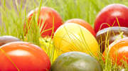 Ale jaja, przyszła wiosna!