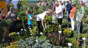 Odwiedź Wiosenne Targi Ogrodnicze w Starym Polu. Już w najbliższy weekend