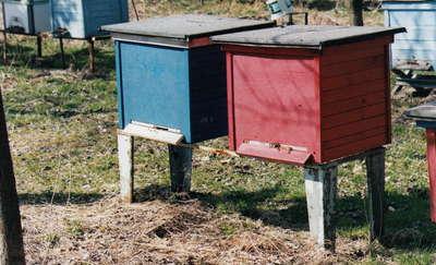 Skradziono ule z pszczołami. Właściciel wyznaczył nagrodę
