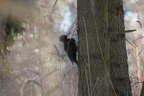 Rezerwat Przyrody Czaplisko Lasek