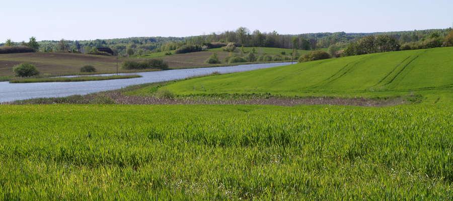 Uprawa roślin w mieszankach ma duże znaczenie zwłaszcza w gospodarstwach prowadzących produkcję systemem ekologicznym