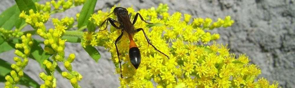 Pracowite owadzie matki