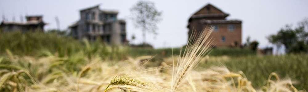 Jaki będzie samorząd rolniczy w nowej kadencji?