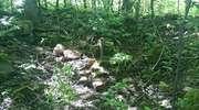 Arsenał z wojny leżał na polu pod lasem