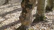 Tajemnica kamiennego żołnierza odnalezionego w lesie pod Zalesiem