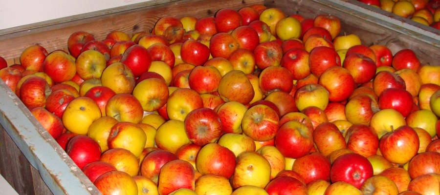 Ozonowanie świetnie sprawdza się w rolnictwie, w kontakcie z żywnością czy warzywami i owocami