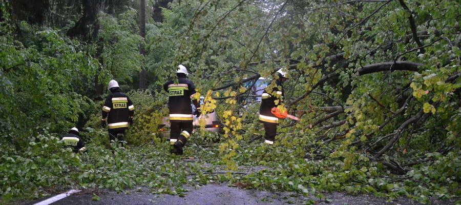 O włos od tragedii. Drzewo spadło na samochód na drodze Ostróda - Morąg