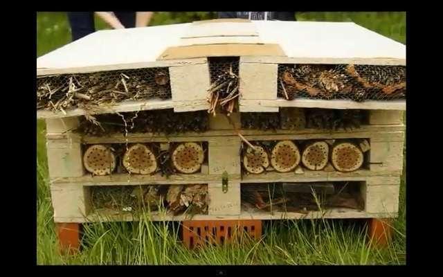 Pszczoły w mieście - full image