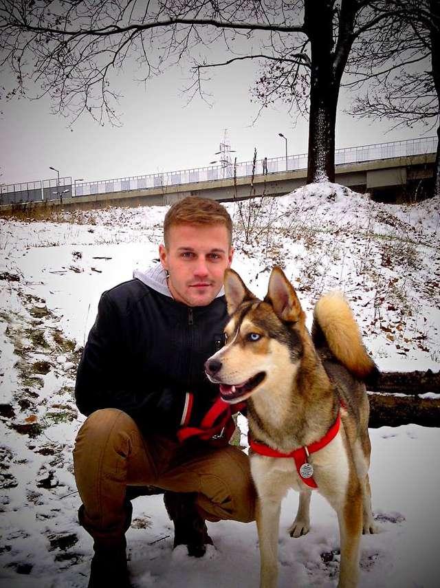 W Olsztynie na Zatorzu zaginął pies rasy husky - full image