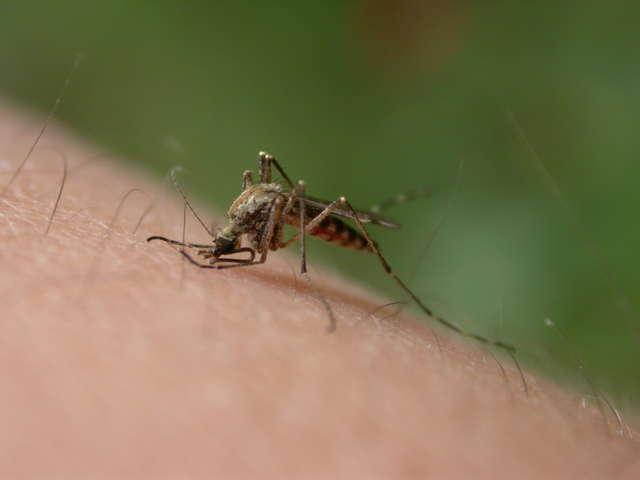 Skuteczne odstraszanie komarów - full image
