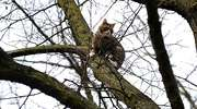 Ściągnęli kota z piętnastometrowego drzewa