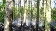 Odwołany zakaz wstępu do lasu w Nadleśnictwie Myszyniec