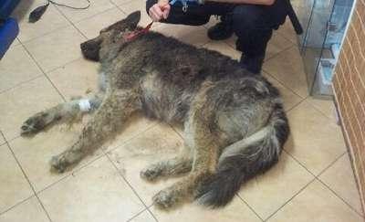 Kto skatował Barego i zakopał go żywcem? Prokuratura ma jeszcze raz zająć się sprawą psa