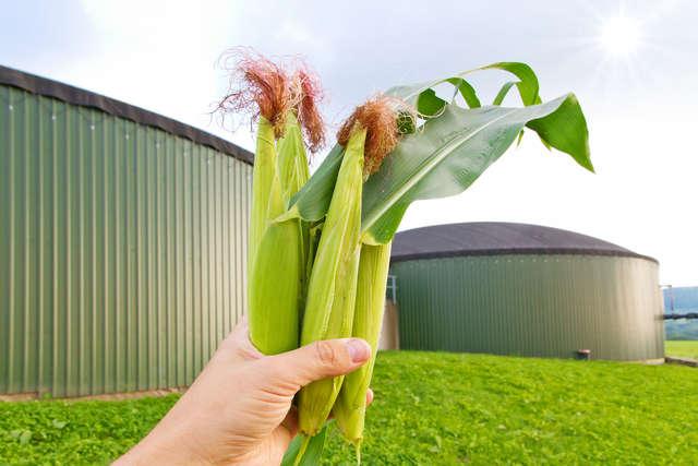 Bioelektrownie są przyszłością rolnictwa w Polsce - full image