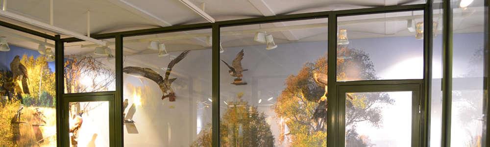 Zwierzęta Warmii i Mazur w Muzeum Ziemi Piskiej