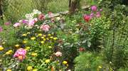 Pochwal się pięknem swojego ogrodu!