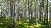 Posadź las z agencyjnym wsparciem