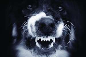 Pies ugryzłpasażerkę w aucie. Kierowca uderzyłw barierę ochronną