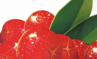 Owoce aceroli. Bogactwo witaminy C