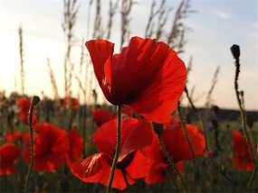 Polne miedze kwiatami malowane