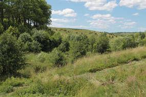 Dolina rzeki płynącej przez Wojkowo jest od dziś wolna od barszczu Sosnowskiego.