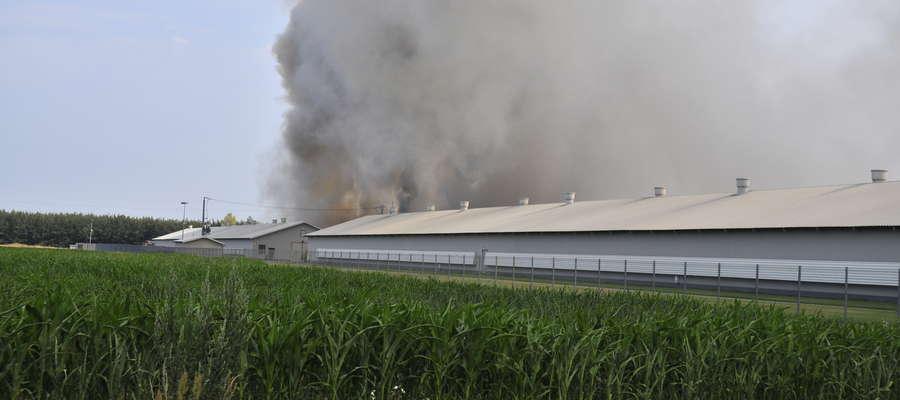 W Brudnicach spłonął nowoczesny kurnik wart 2,5 miliona złotych