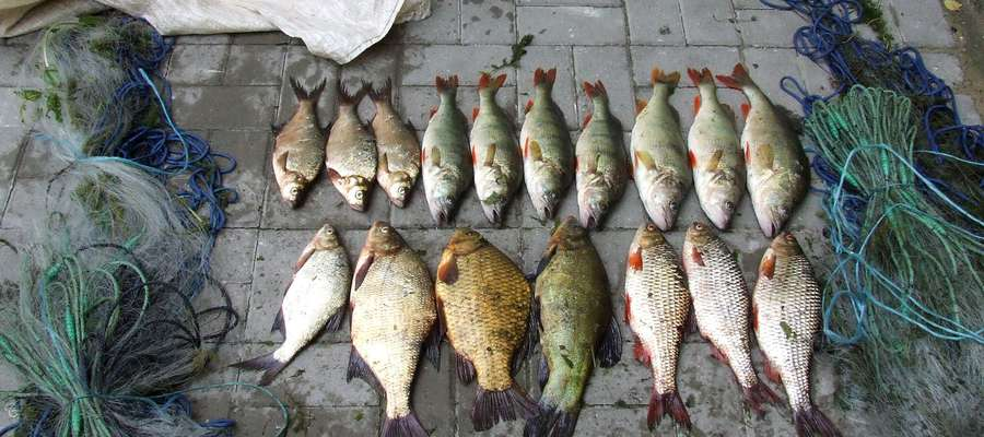 Zabezpieczone ryby i sieci