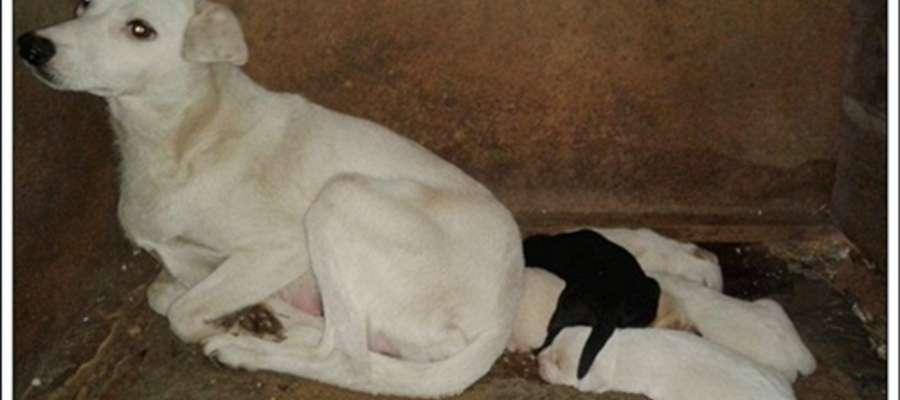 Sympatyczna suczka i jej szczeniaki czekają na dobrych opiekunów