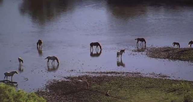Władze parku w Arizonie chcą usunąć z niego dzikie konie - full image