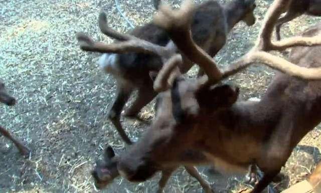 Upały dają się we znaki nie tylko ludziom. Pracownicy zoo chronią zwierzęta przed przegrzaniem - full image