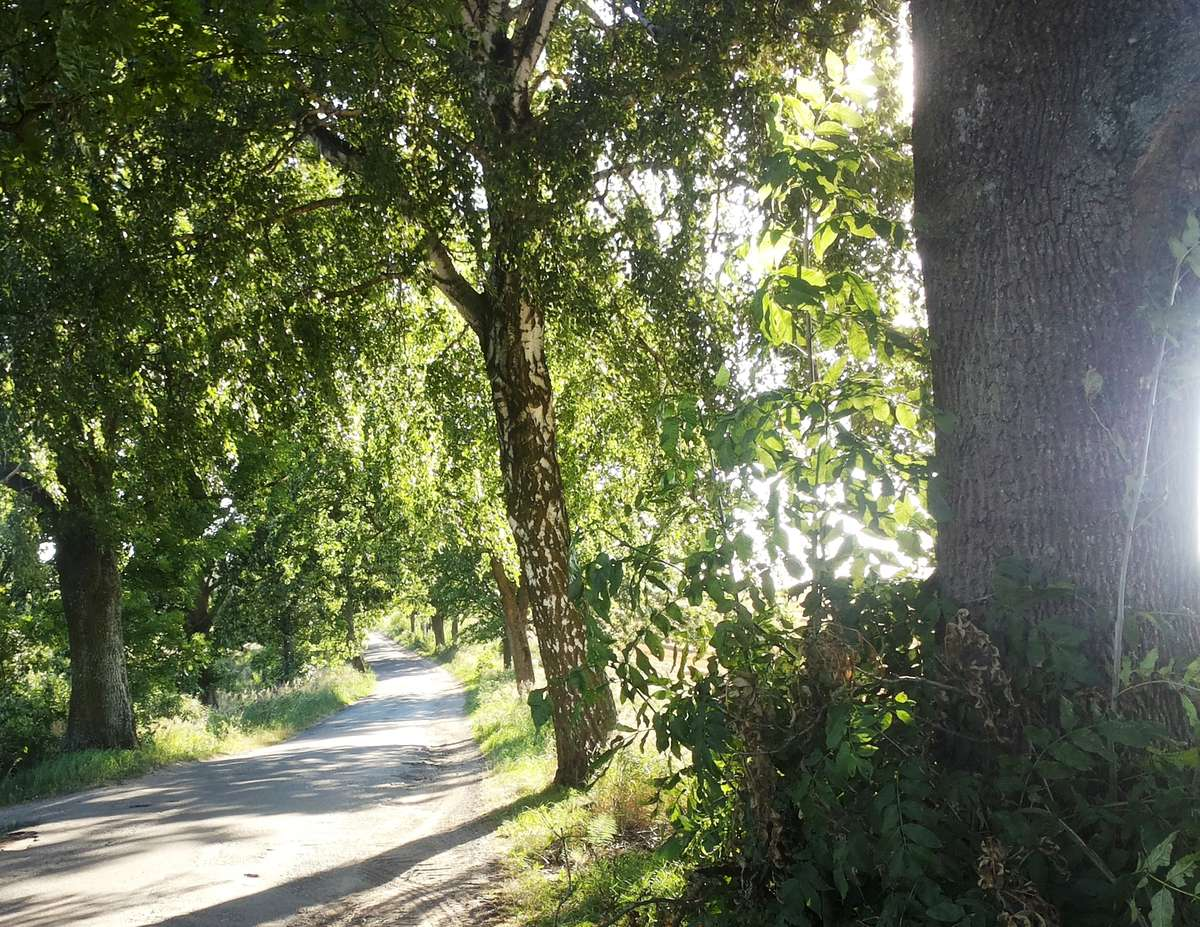 Droga Szczęsne-Stary Olsztyn