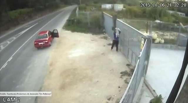 Przerzucili psa przez ogrodzenie schroniska i odjechali - full image