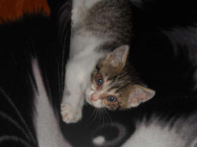 Poszukujemy właściciela małej kotki - full image