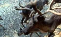 Upały dają się we znaki nie tylko ludziom. Pracownicy zoo chronią zwierzęta przed przegrzaniem