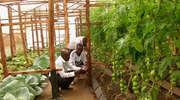 Hydroponika ratunkiem dla afrykańskiego rolnictwa